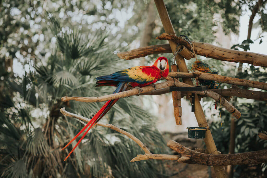 Macaw Parrot 20171113_Anita Jeanine Photography_1405